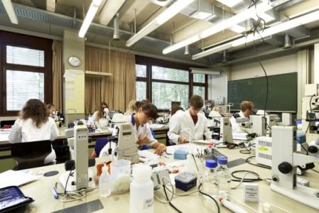 Studierende arbeiten in einem Labor der FAU